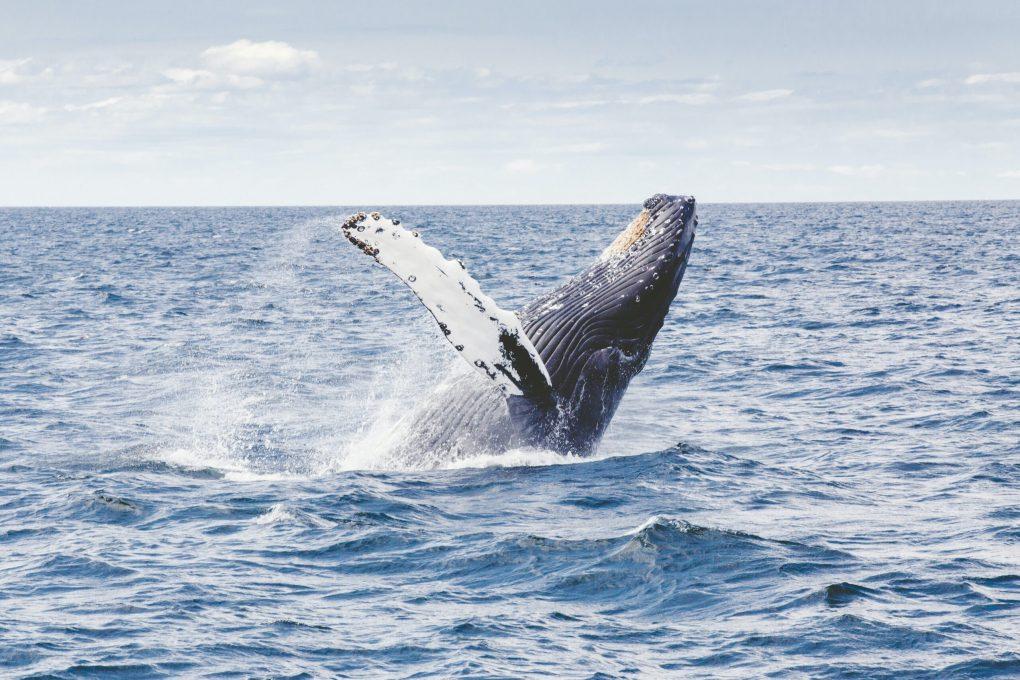 Dockerのクジラは何クジラ?