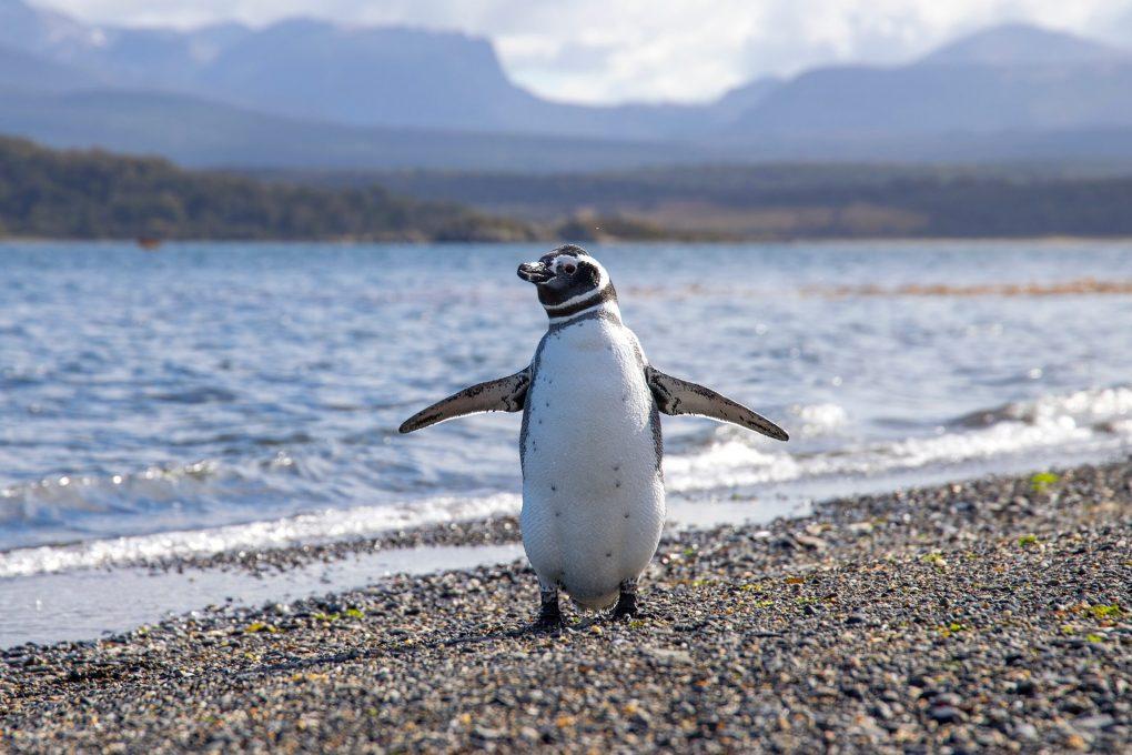 Linuxのマスコットであるペンギンの正体とは?